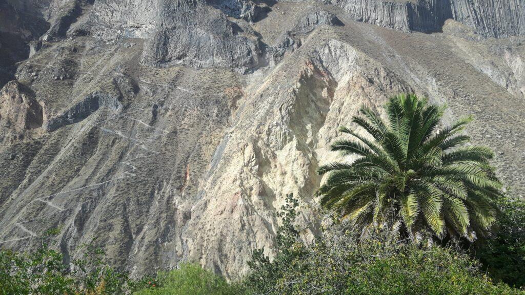 Bolivia manca poco: sto arrivando. Enorme palma nel canyon