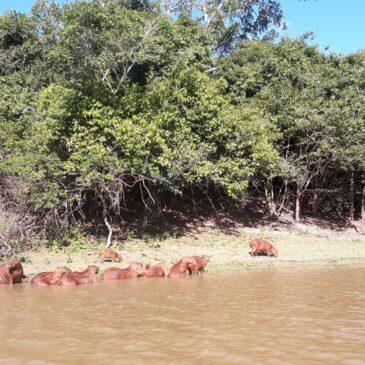 NELLA PAMPA AMAZZONICA BOLIVIANA