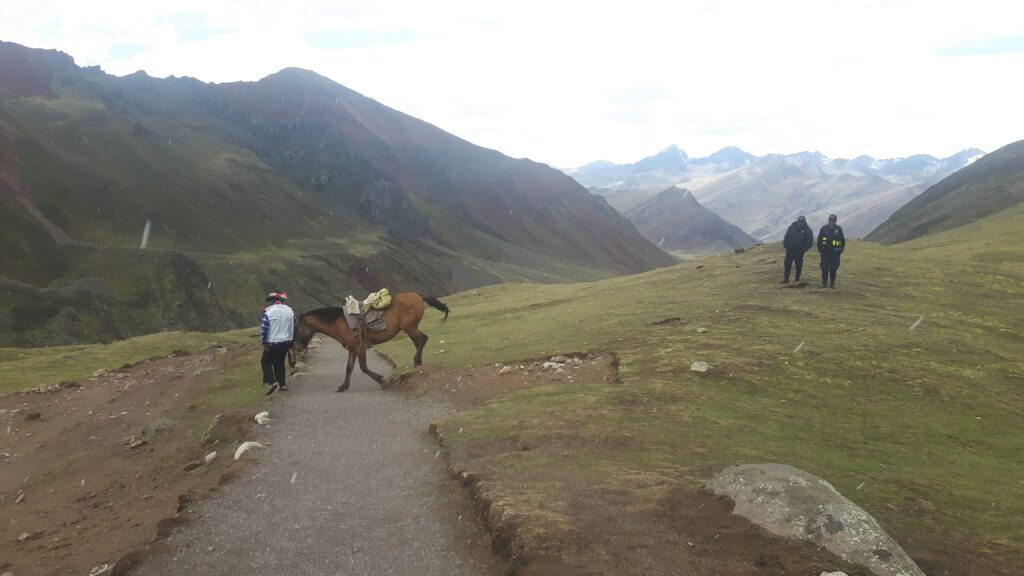 Il cavallo e il suo padrone